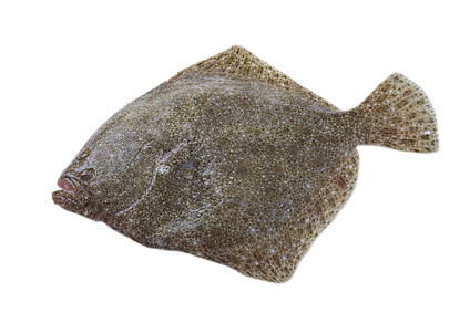 "Poisson "" Turbot """