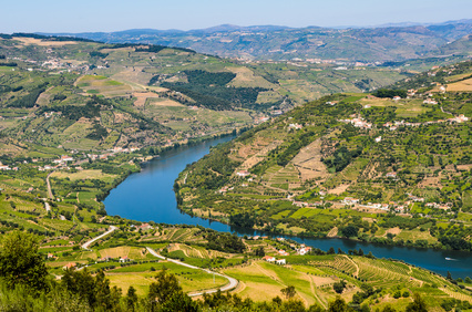 Vineyards on the banks of Douro, Portugal