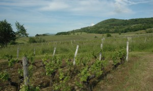 Montigny-les-Arsures-Paysage