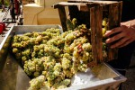 Vinification vins blancs