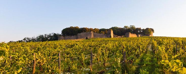 grand cru jura savagnin