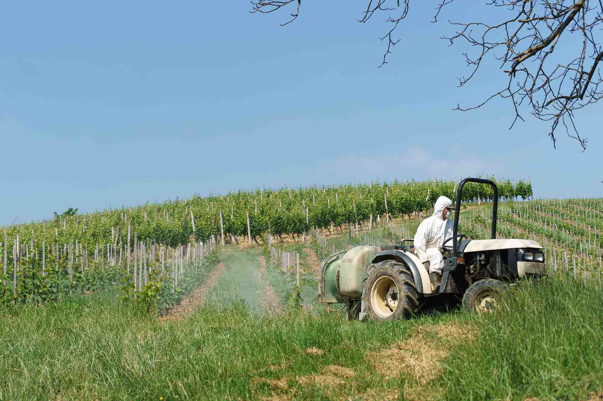 vins et pesticides Bordeaux