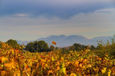 Domaine Pierre Andre