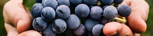 Vocabulaire de vinification rouge