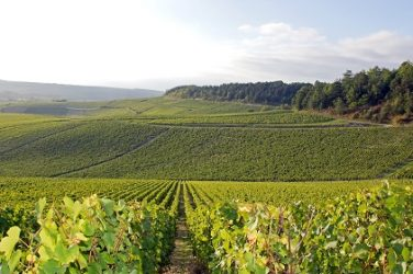Guide Chablis iDealwine